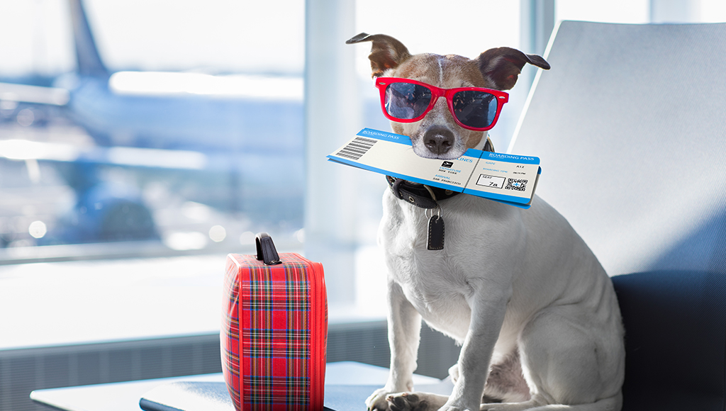 Pet Friendly Places When You Travel