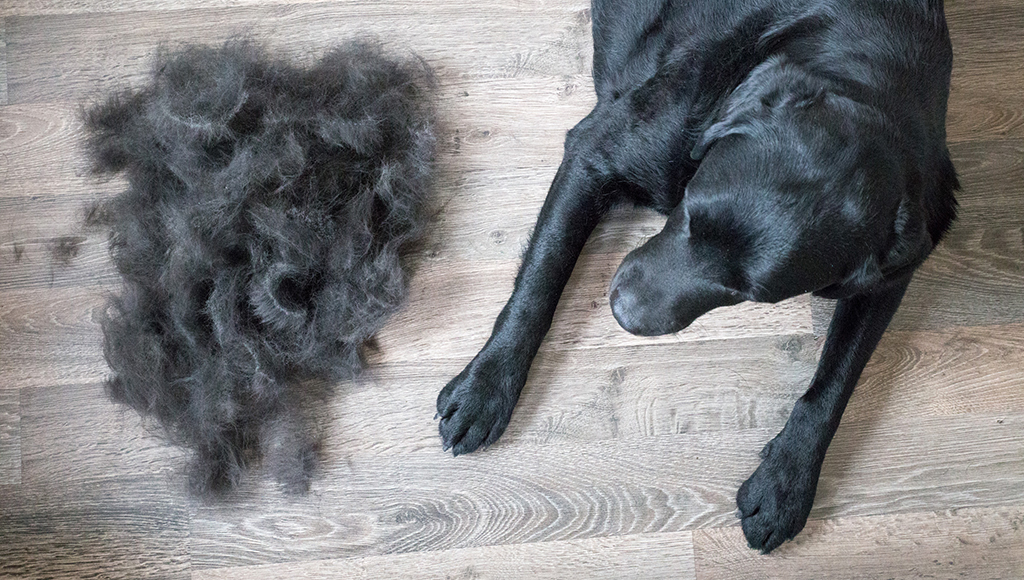 Different Types of Pet Hair Loss - Part II