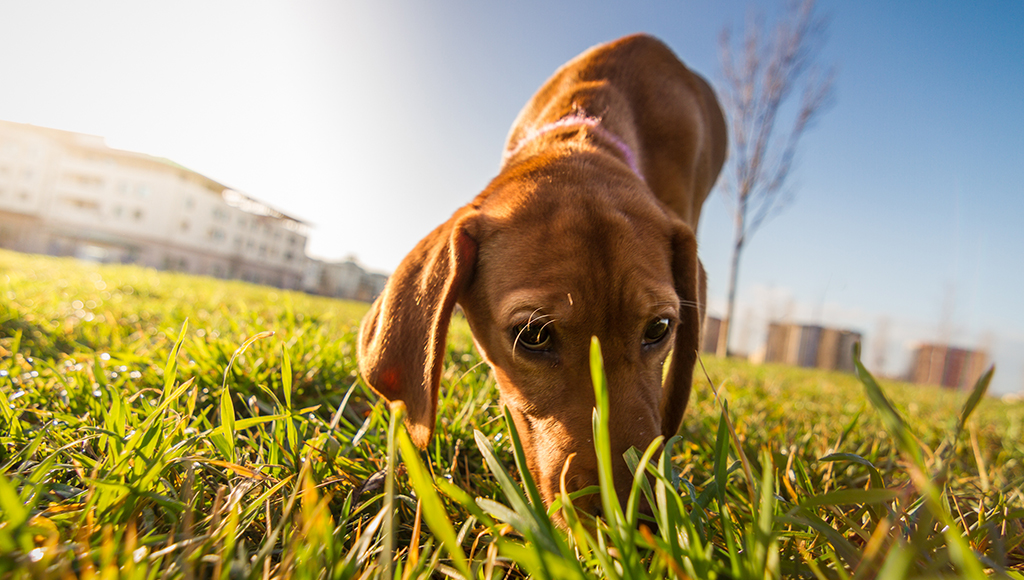 Why Do Some Dogs Eat Feces?