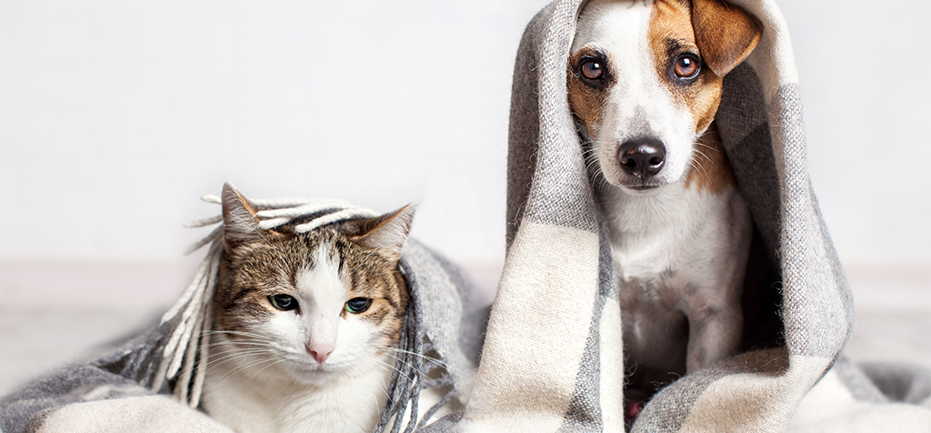 Coronavirus and Pets: Is Your Cat or Dog at Risk for COVID-19?