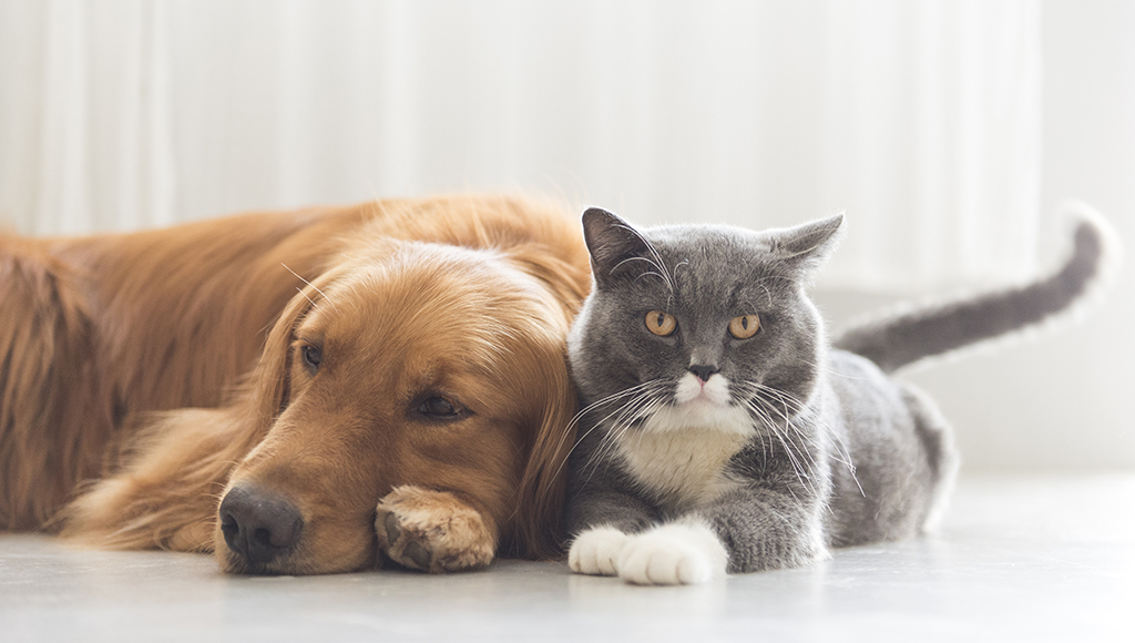 Laryngeal Paralysis in Dogs and Cats