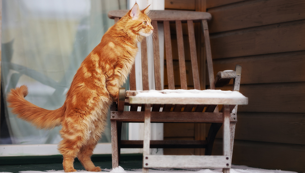 Understanding Your Cat's Body Language