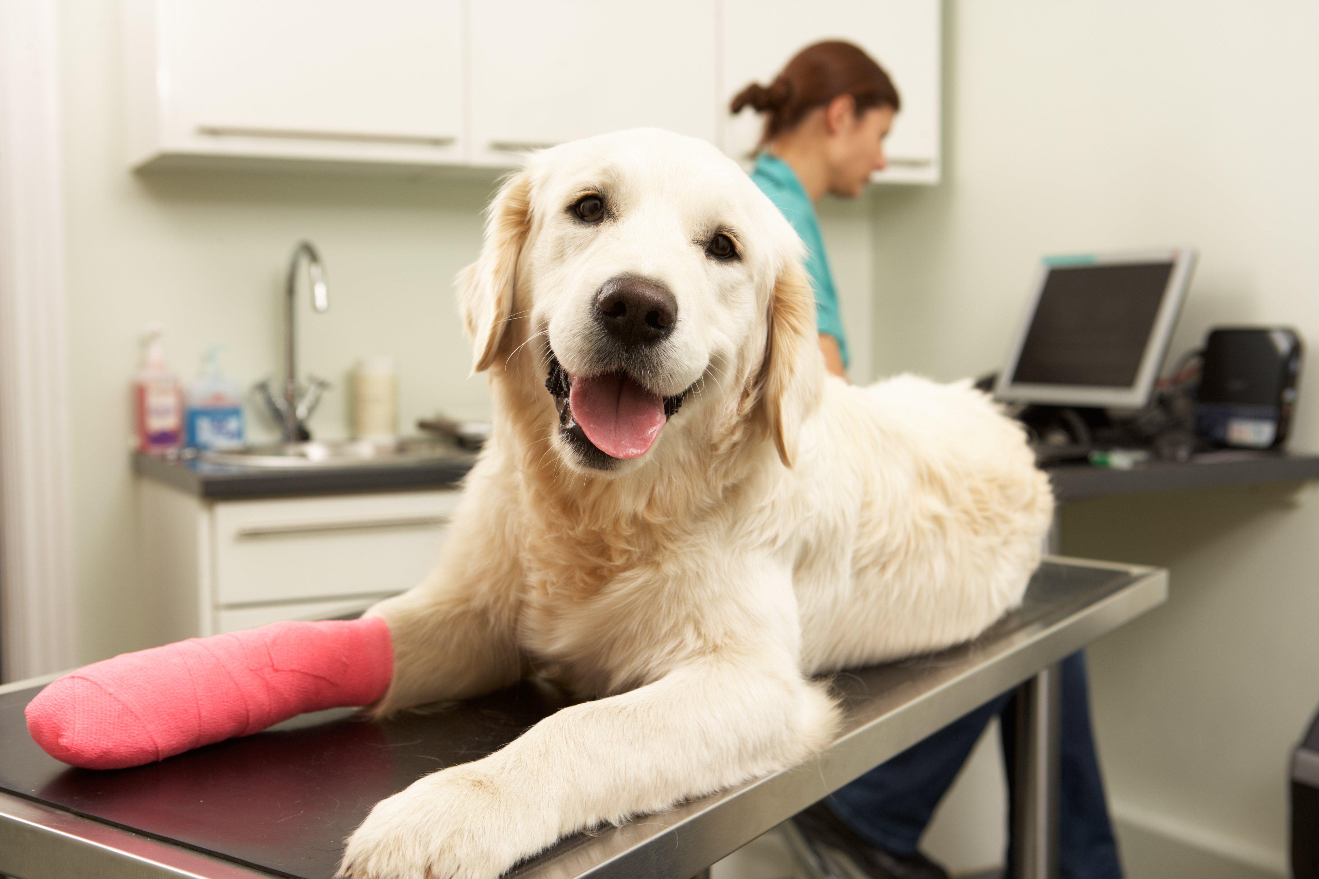 How to Choose a Pet Insurance Plan