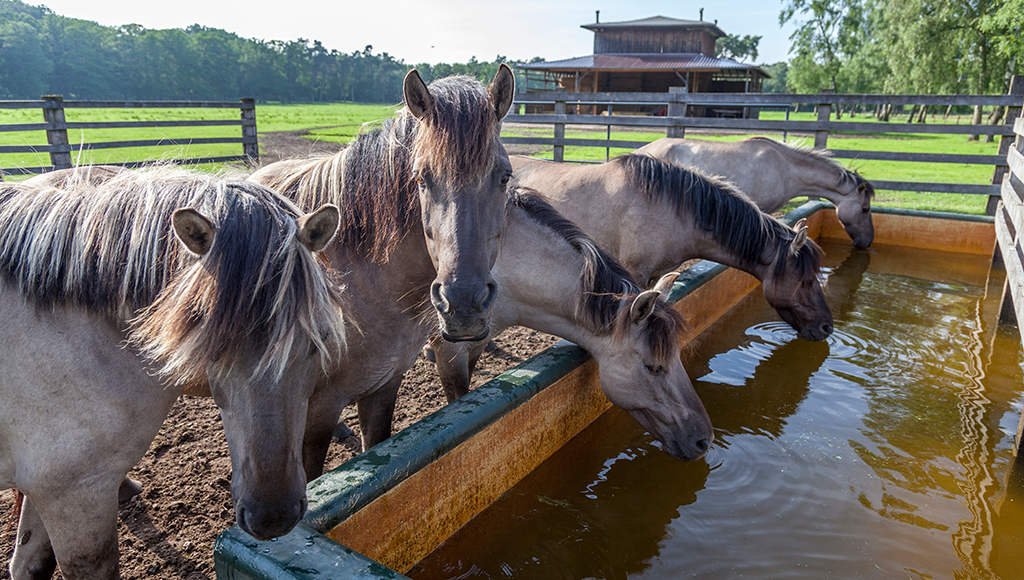 Hot Weather Hazards For Horses