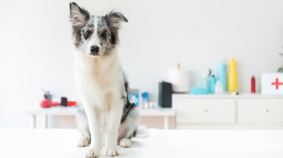 Essential Items to Have in Your Pet's Emergency Pack
