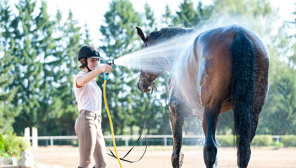 Preventing Heat Stroke in Horses