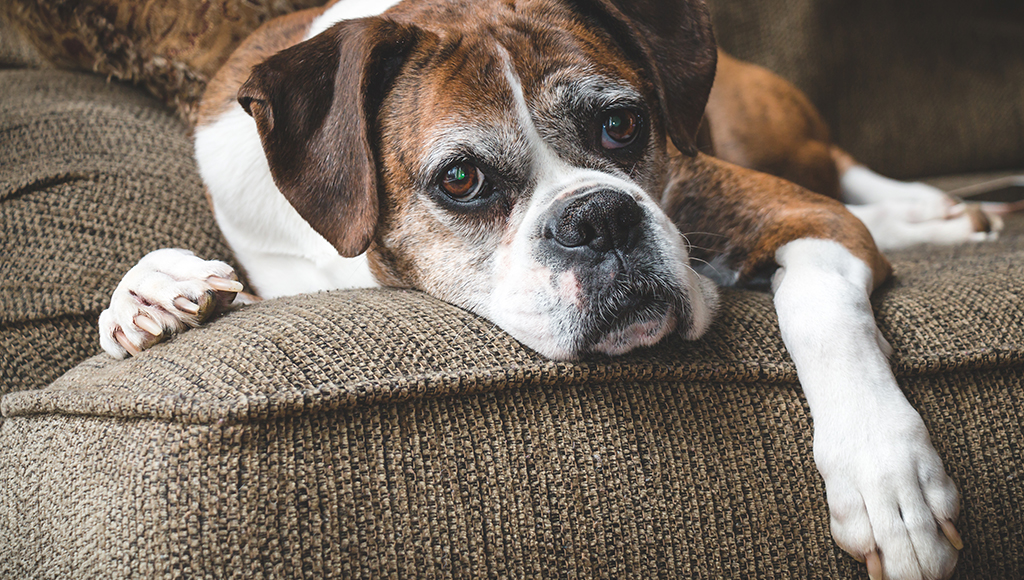 Dr. Harvey: Arthritis in Aging Pets