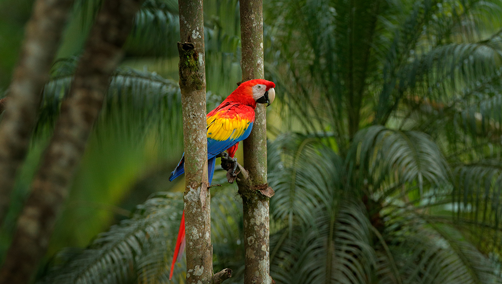 Seasonal Changes in Parrots: Spring Fever